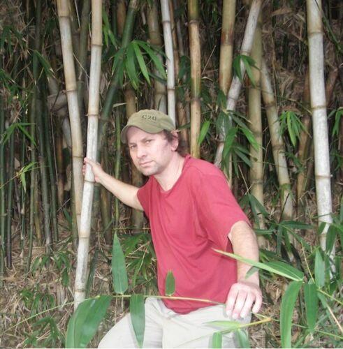 Großes Bambuspflanzen Sortiment Samen Set winterharte schnellwüchsige Pflanzen