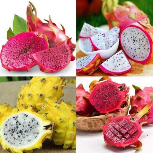 200stk 4 Arten Mix Pitaya Drachenfrucht Samen Duftenden Kaktus Selten Exotisch