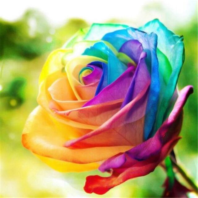 Beautiful 50Pcs Flower Plant  Seeds Holland Rose Seeds Lover Gift Garden Home