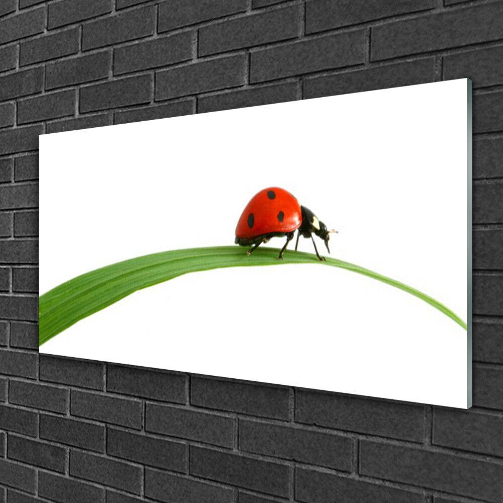 Image sur verre Tableau Impression 100x50 Floral Coccinelle