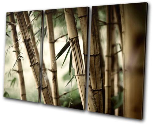Floral Bamboo Shoots TREBLE CANVAS WALL ART Picture Print VA