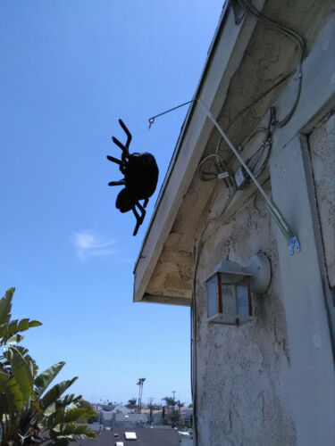 Woodpecker Problems Birds Away Attack  Scare Spider Scares Woodpeckers