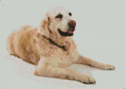 "Golden Retriever Puppy Counted Cross Stitch Kit 14/"" x 10.5/"" 35.5cm x 26cm 14 ct"