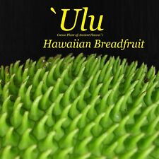 ~ULU~ BREADFRUIT Artocarpus Ancient HAWAIIAN Canoe Plant Live small potted plant