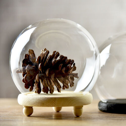 Wood Base Decor Glass Globe Display Dome Cover Cloche Bell Jar Dry Flower Vase