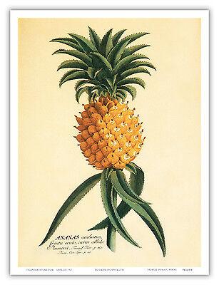 Ho'okipa Hospitality Hawaiian Pineapple Aloha Vintage Art Poster Print