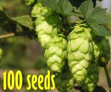 Hops 100 Seeds Humulus lupulus European Hop Flower Home Garden Beer Perennial