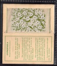 KENSITAS Silk Flower Small GYPSOPHILIA Folder Type B
