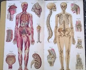 Old Medical Anatomy Book Color Plates Baillieres Atlas Female Body