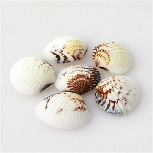 20-pcs-Mixed-Natural-Sea-Shells-Beads-Clams-Shells-Craft-Decor-Beach-Wedding