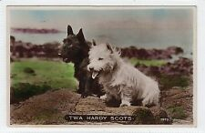 Two picture postcards of Scottish Terriers (C25382)