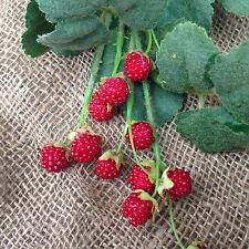 Artificial Raspberries spray 3 stems £9.99