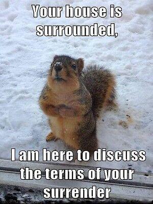 Funny Squirrel  refrigerator magnet 2 1/2x 3 1/2