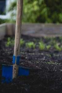 Heirloom Vegetable Seed 12 Variety Garden Pack- See Description for Details