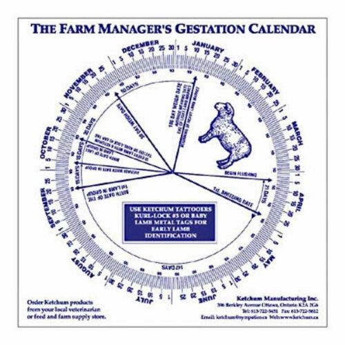Sheep Gestation Calendar Calculate Birth Breeding