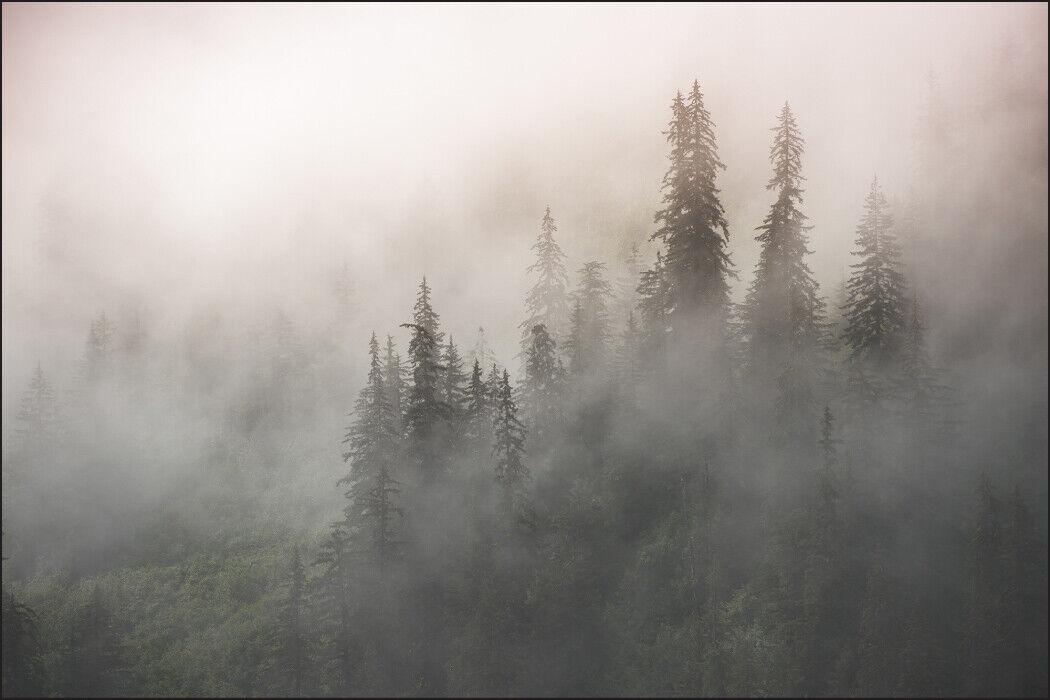 VLIES FOTOTAPETE XXL TAPETE Natur Landschaft Nebel WALD 8275