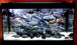 3D Grey Rock Solid Background For Vivarium Aquarium Fish Tank Polyresin