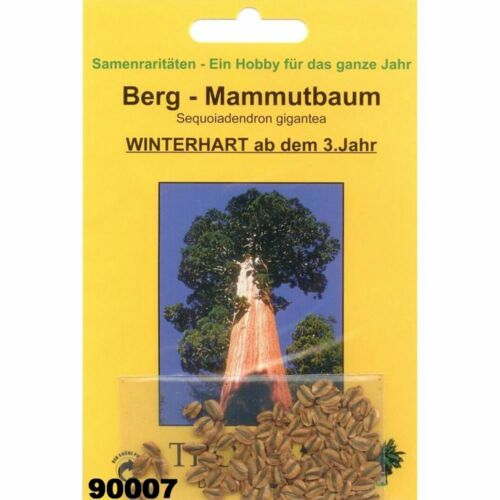 Bonsai Sequoiadendron gigantea Bergmammutbaum 50 Samen v 90007