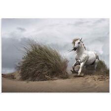 Wild Horse Art Running Horse Landscape Images of Wildlife on Acrylic