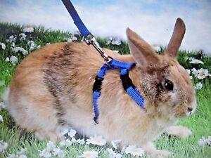 Conejo-gato-Pequeno-Animal-Mascota-Arnes-amp-Juego-De-Plomo-tambien-se-puede-utilizar-para-hurones