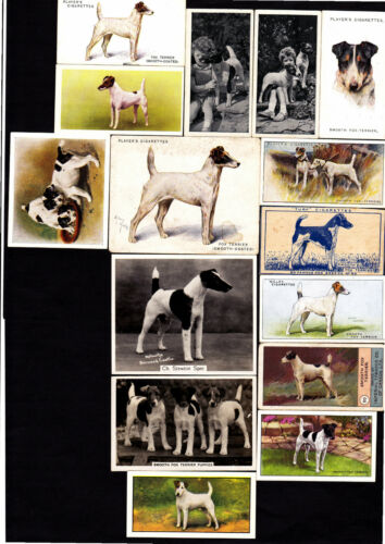 15 Different Vintage Smooth Fox Terrier TobaccoCandy Dog Cards