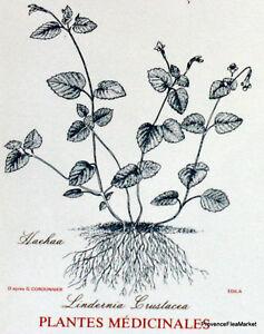 Obligeant Yt 317 Plantes Medicinales Tahiti PolynÉsie FranÇaise Fdc 1° Jour