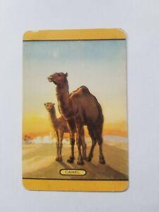 VINTAGE-SWAP-CARDS-COLES-034-Camel-034-Blank-Back