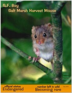 Marsh-Harvest-Mouse-an-Endangered-Species-card-by-034-PostcardsTo-SaveThePlanet-034