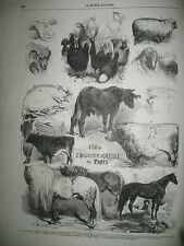 CONCOURS EXPOSITION AGRICOLE PALERME TROUPES NAPOLITAINES CATANE GRAVURES 1860