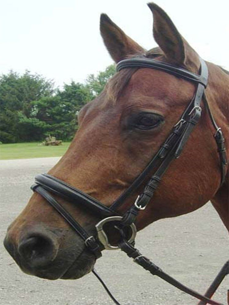 Opulent Series Classic Dressage Bridle with Crank & Flash USA Leather Oversize