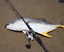 Raiden-pop-from-Rapture-120mm-44-5g-fishing-poppers-6-colours-great-casting thumbnail 7