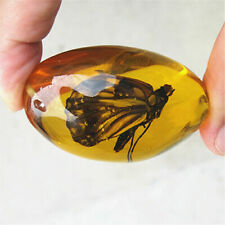 Beautiful Amber butterfly Fossil Insects Manual Polishing