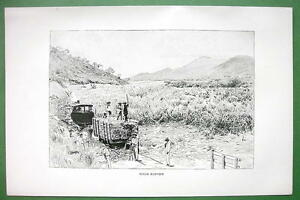 BRAZIL-Sugar-Harvest-Field-South-America-Antique-Print-Engraving