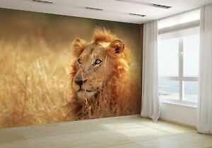 Lion-lying-in-dense-grassland-Wallpaper-Mural-Photo-9802201-budget-paper