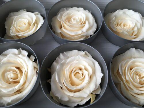 6 Stabilisierte Ewig haltbare Rosen auf Glycerinbasis konservierte Rosenköpfe