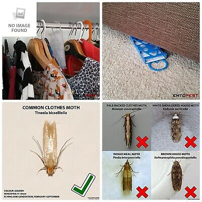 Entopest 10 x Professional Common Clothes Moth Traps /& 10 Pheromone Glue Boards