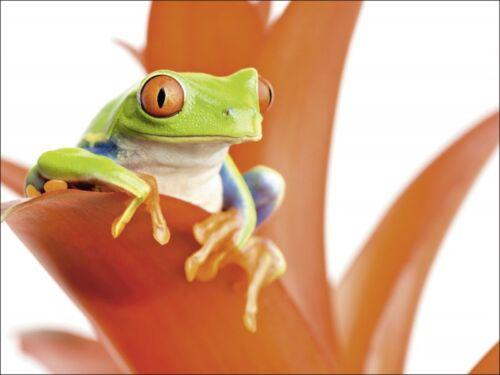 Wandbilder selbstklebend Sascha Burkard Tier WasserTier Frosch Foto Orange B7DE