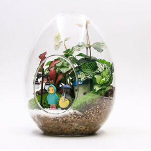 12pcs Glass Terrarium Container Hydroponics Planter Pot Vase