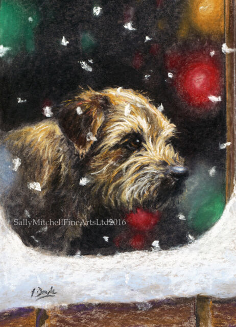 C80X Border Terrier Dog Christmas cards pack of 10 by Paul Doyle