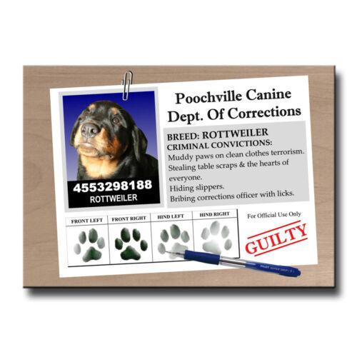 ROTTWEILER Rap Sheet FRIDGE MAGNET New DOG ROTTIE Funny