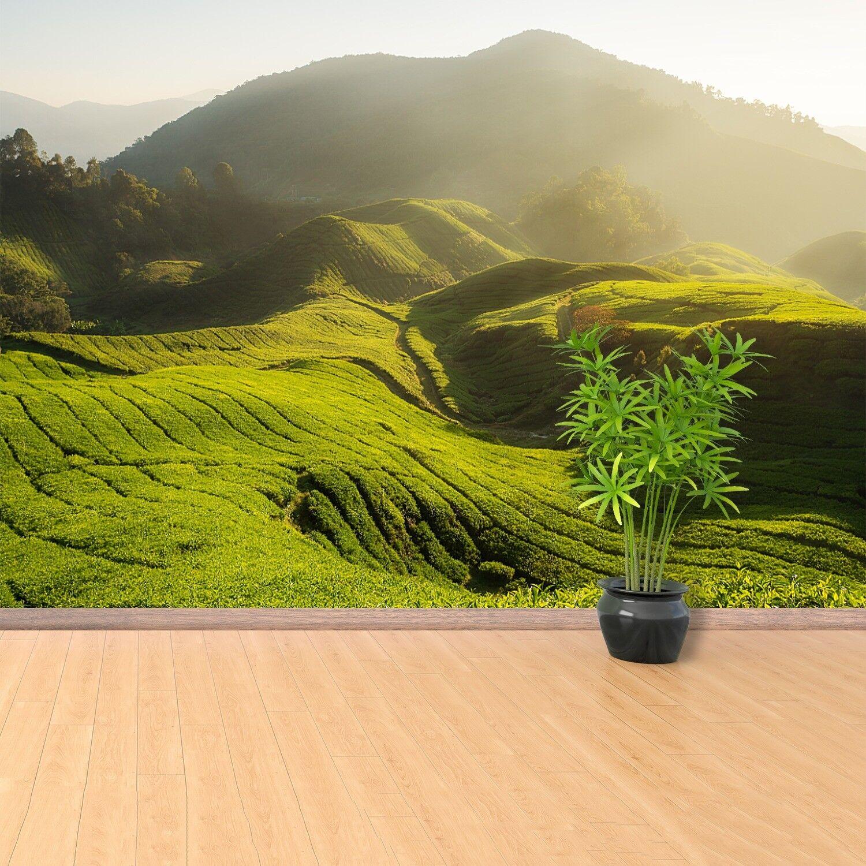 Fototapete Selbstklebend Einfach ablösbar Mehrfach klebbar Tee Plantage
