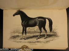1850 Jardine Book of HORSES 28 Hand-colored Illustrated Donkey Equestrian Racing