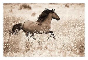 Western Print 36x17 Reneades By Lisa Dearing Horses