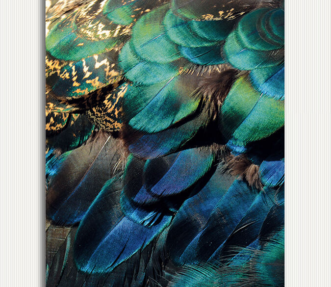 3D Gorgeous Feather 663 WallPaper Murals Wall Print Decal Wall Deco AJ WALLPAPER