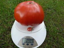 Bulgarische Tomaten, Riesenfleischtomaten Saatgut 20+ Stück Samen aus Eigenanbau