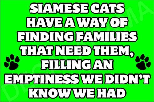SIAMESE CATS HAVE WAY OF FINDING FAMILIES NEED THEM Fun Fridge Magnet Ideal Gift