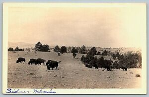 old-RPPC-postcard-uncaptioned-buffalo-herd-on-range-hand-written-Sidney-Nebraska