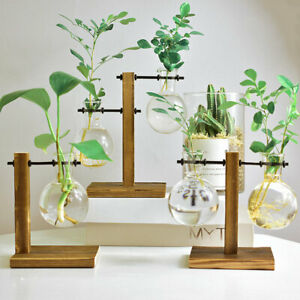 Hydroponic-Vase-Solid-Wooden-Stand-Glass-Bulb-Plants-Flowers-Terrarium-Container