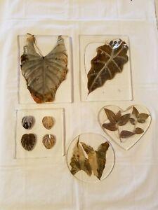 Folk Art Framed Botanical Specimens Leaves Under Plastic  - counter pot holders