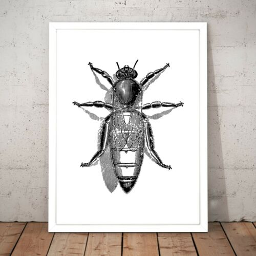 A4 A3 A2 A1 A0 Framed Queen Bee Drawing Insect Anatomy Wall Art Poster Print